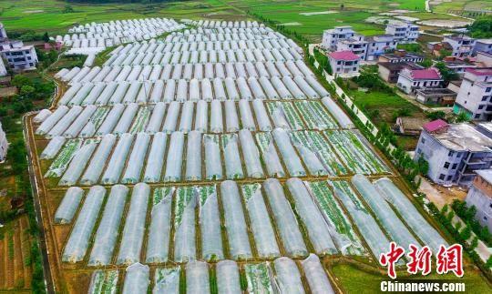 航拍江西新余有机蔬菜基地受损大棚