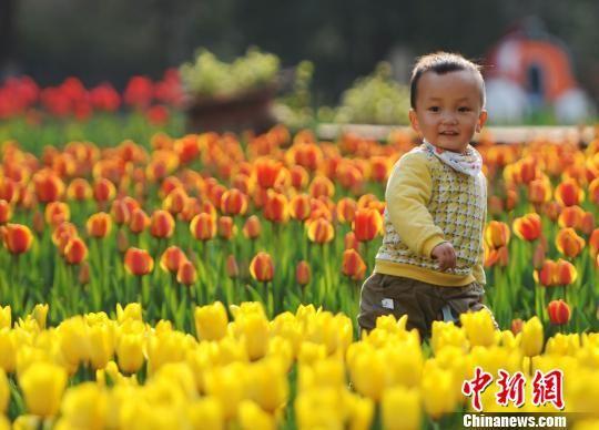江西九江20余万株郁金香迎春斗艳