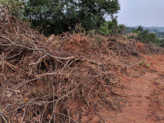 勒公浪在被毁坏的山林现场