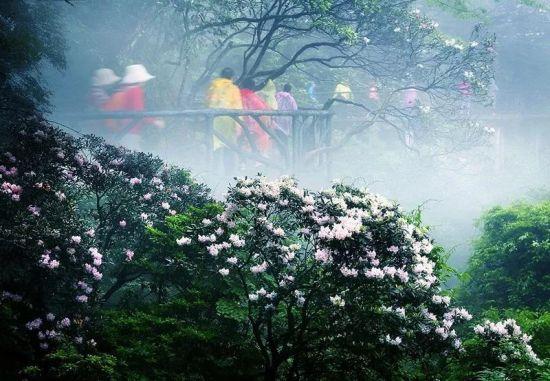 春雨游三清 彭苗 摄