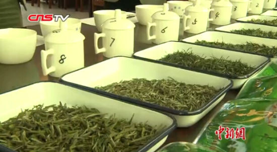 """鄱阳湖产区40余家茶商携产品争霸""""茶王"""""""
