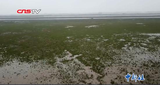 """持续低水位 鄱阳湖变身""""大草原""""为候鸟提供草料"""