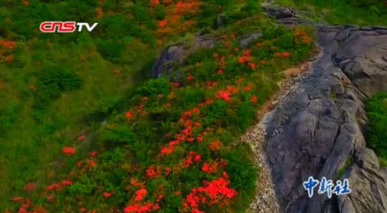 航拍江西修水初夏高山上的万亩杜鹃花海