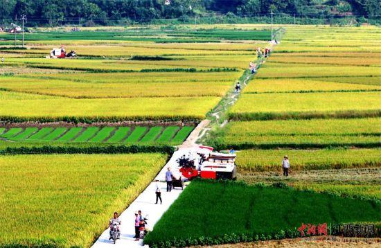 龙8国际娱乐手机登录遂川:夏日美丽乡村构成农忙丰收图