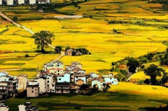 龙8国际娱乐手机登录婺源山村丰收美景如画