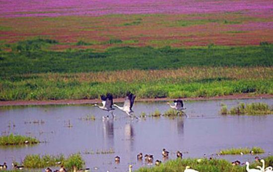 鄱阳湖正式开启观鸟模式