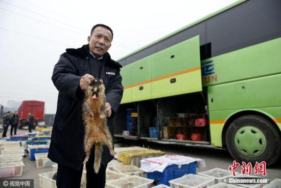 """龙8国际娱乐手机登录高速截获大巴 车内""""坐""""150箱野生动物"""