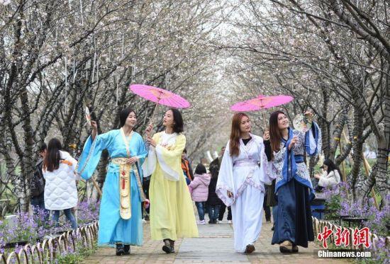 龙8国际娱乐网址樱花盛开春意浓 汉服佳人入画来