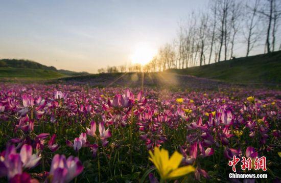 最美人间四月天 航拍鄱阳湖畔花红草绿