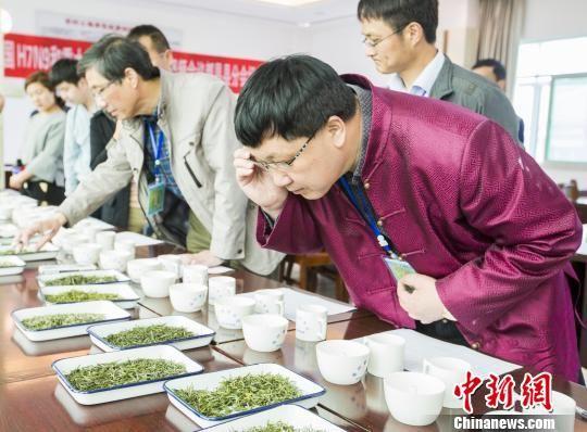 """鄱阳湖产区40余茶商携产品""""斗茶""""争霸茶王"""