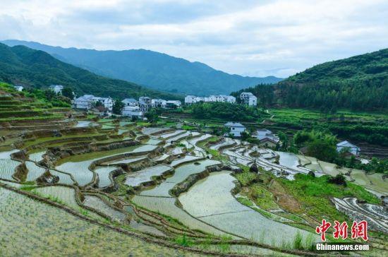 芒种节气将至 龙8国际娱乐手机登录横峰千亩梯田耕种忙