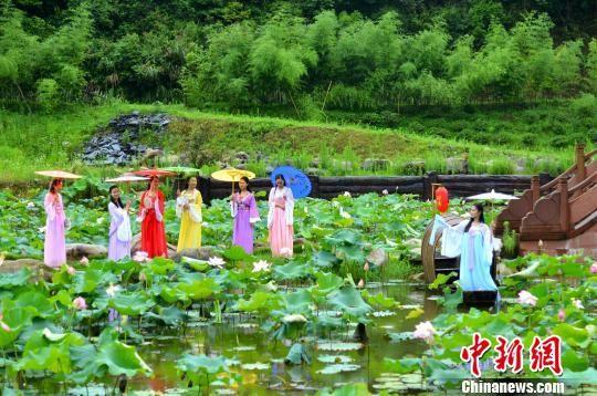 夏至时节莲叶田田 龙8国际娱乐手机登录婺源古村赏雨荷