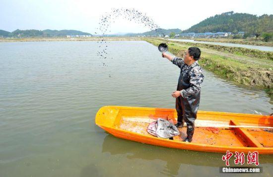 春分至播种忙 龙8国际娱乐手机登录仙女湖播撒芡实种子