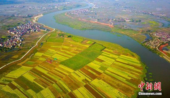 航拍龙8国际娱乐手机登录袁河江畔新溪千亩油菜花海绽放