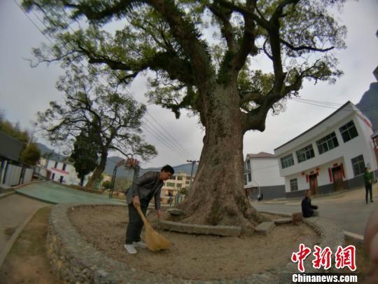 """百年古树配""""保姆""""?靖安百人认养古树"""