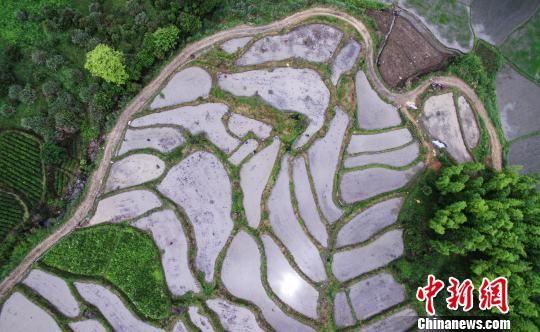 铅山举办首届稻作文化节 再现传统农耕技艺