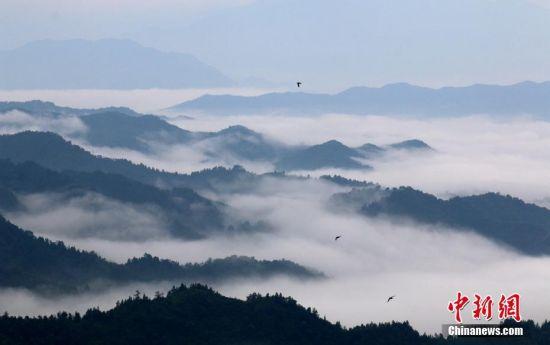 龙8国际娱乐手机登录遂川山谷云雾缭绕 似水墨丹青画