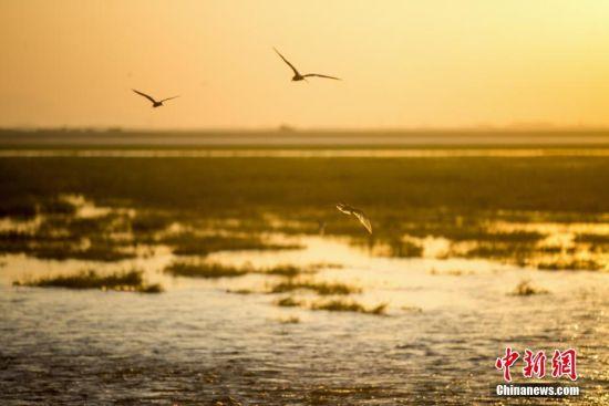 航拍夏日鄱阳湖湿地美景 水草相间候鸟徜徉