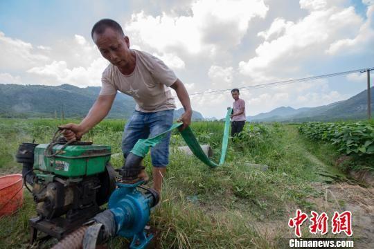 持续高温少雨 注册送白菜网局地稻田缺水民众抗旱