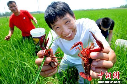 """龙8国际娱乐手机登录鄱阳""""稻虾共作""""助农民增收"""