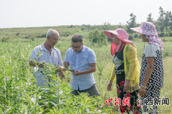 大学生返回鄱阳湖畔贫困村 创业成