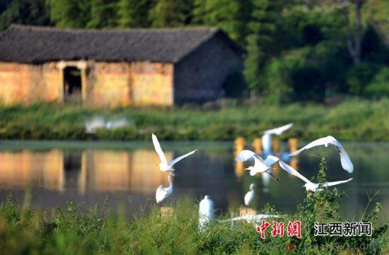 龙8国际娱乐手机登录万载:人鸟和谐家园美