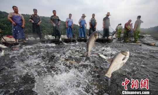 龙8国际娱乐手机登录仙女湖:巨网秋捕鱼满仓