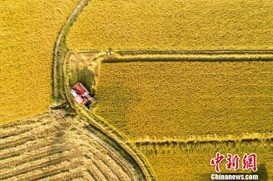 金秋时节:注册送白菜网旱区中稻开镰收割