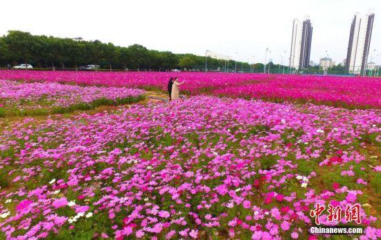 龙8国际娱乐手机登录一高校现粉色浪漫花海