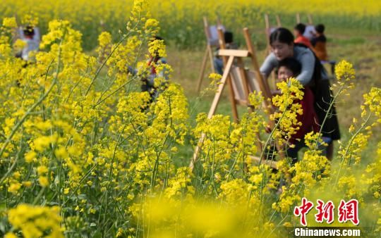 注册送白菜网新余千亩油菜花田盛放 学童画笔绘春天