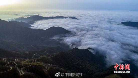 航拍龙8国际娱乐手机登录太平山万亩野樱花云海之上盛放争春