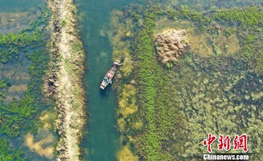 航拍新余虾稻共作基地 劳作绘就美好田园画卷
