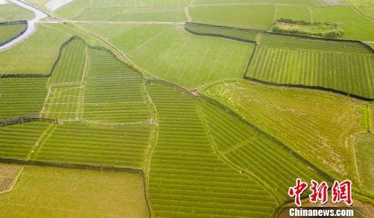 航拍注册送白菜网高产油茶育苗基地