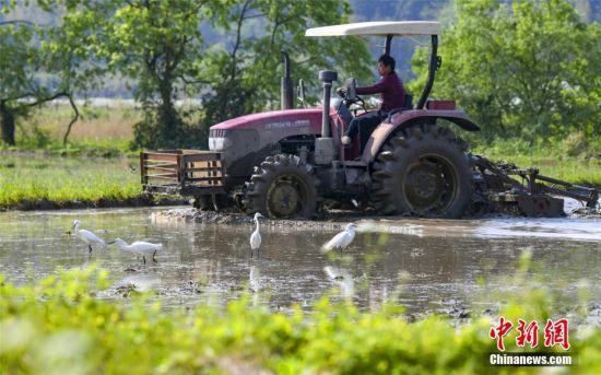 江西新余:群鹭和谐伴春耕 科技兴农生态美