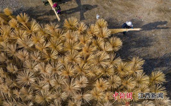 """江西新余:竹产业绽放""""致富之花"""""""